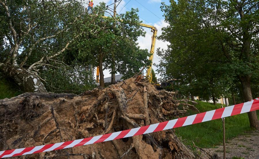 Zniszczone przez burzę drzewa