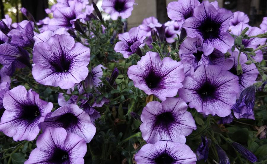 Zdjęcie zrobione telefonem Wiko View 2 Pro