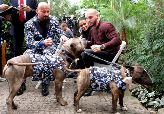 Artur Szpilka na spacerze ze swoimi psami