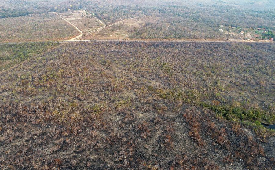 Pożary lasów tropikalnych