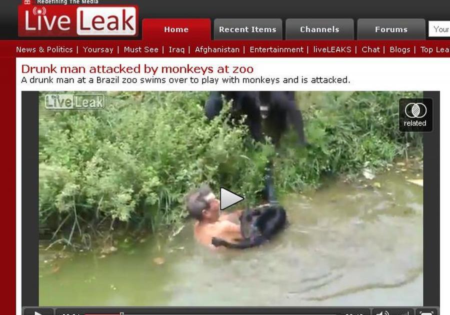 Pijak w zoo zaatakowany przez małpy