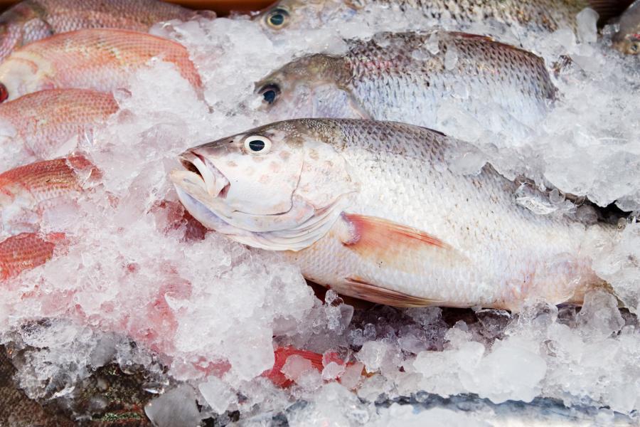 Ryba mrożona, zdjęcie ilustracyjne