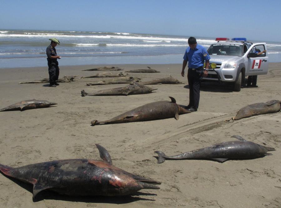 Martwe delfiny i pelikany na plażach w Peru