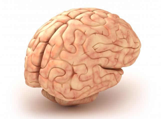 Dieta dobra na mózg