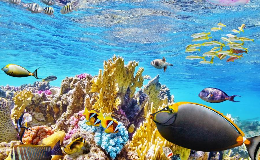 Wielka rafa koralowa