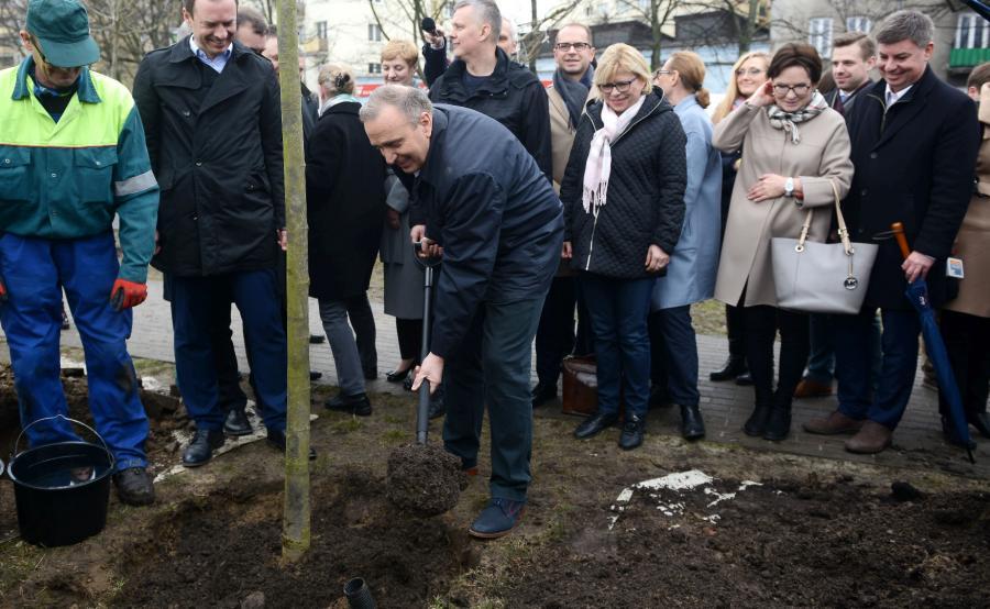 Grzegorz Schetyna wraz z posłami PO sadzi drzewa w Warszawie